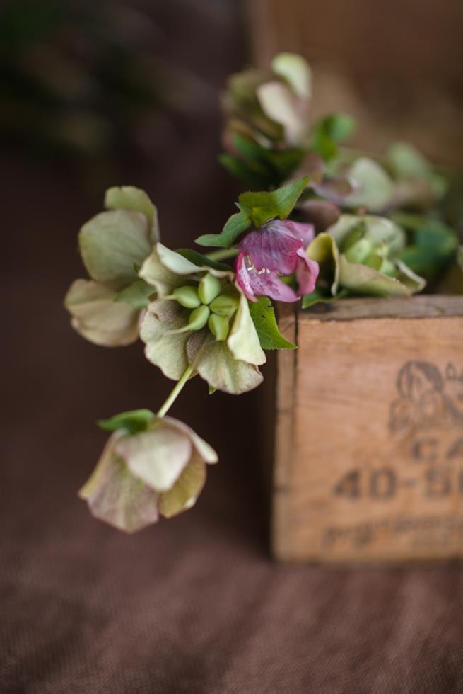 Budget Friendly Wedding Flowers