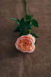 Campanella Rose - An Organic Hand-Tied Bridal Bouquet in Blush, Peach & Marsala