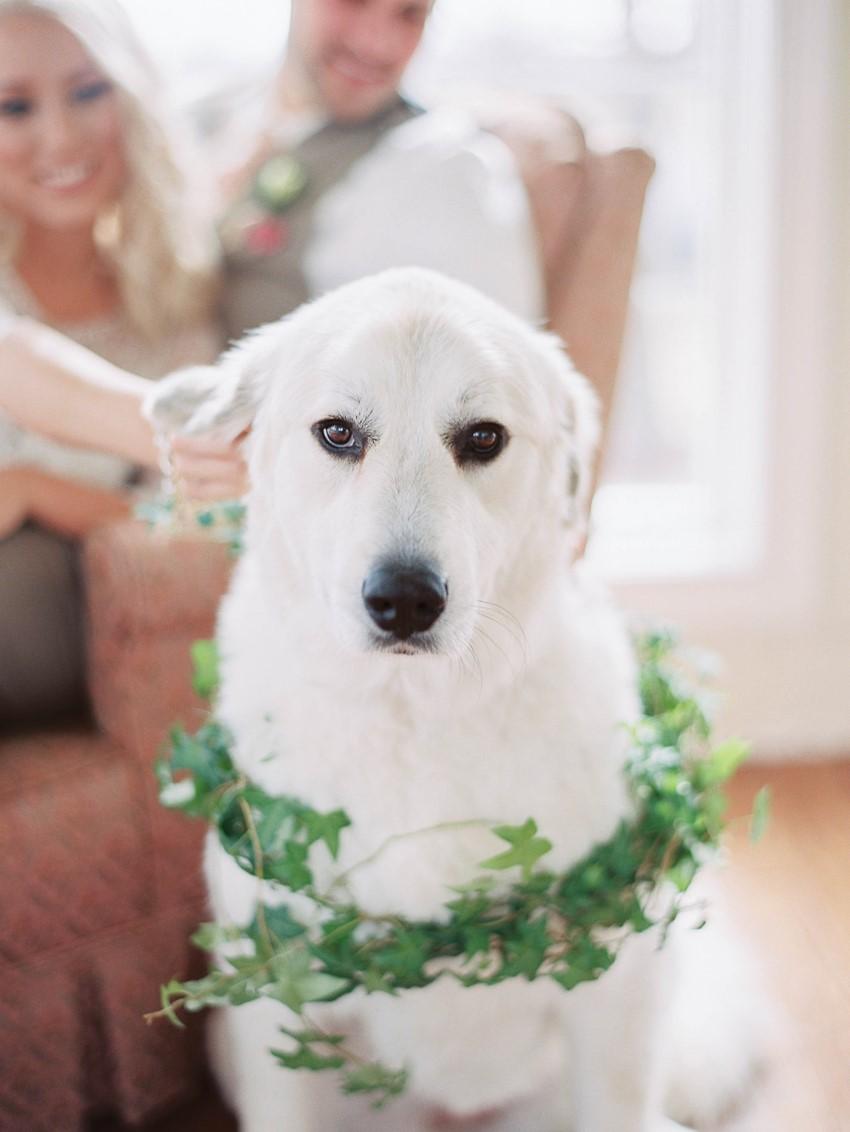 Dog Ring Bearer // Photography ~ @shannonduggan