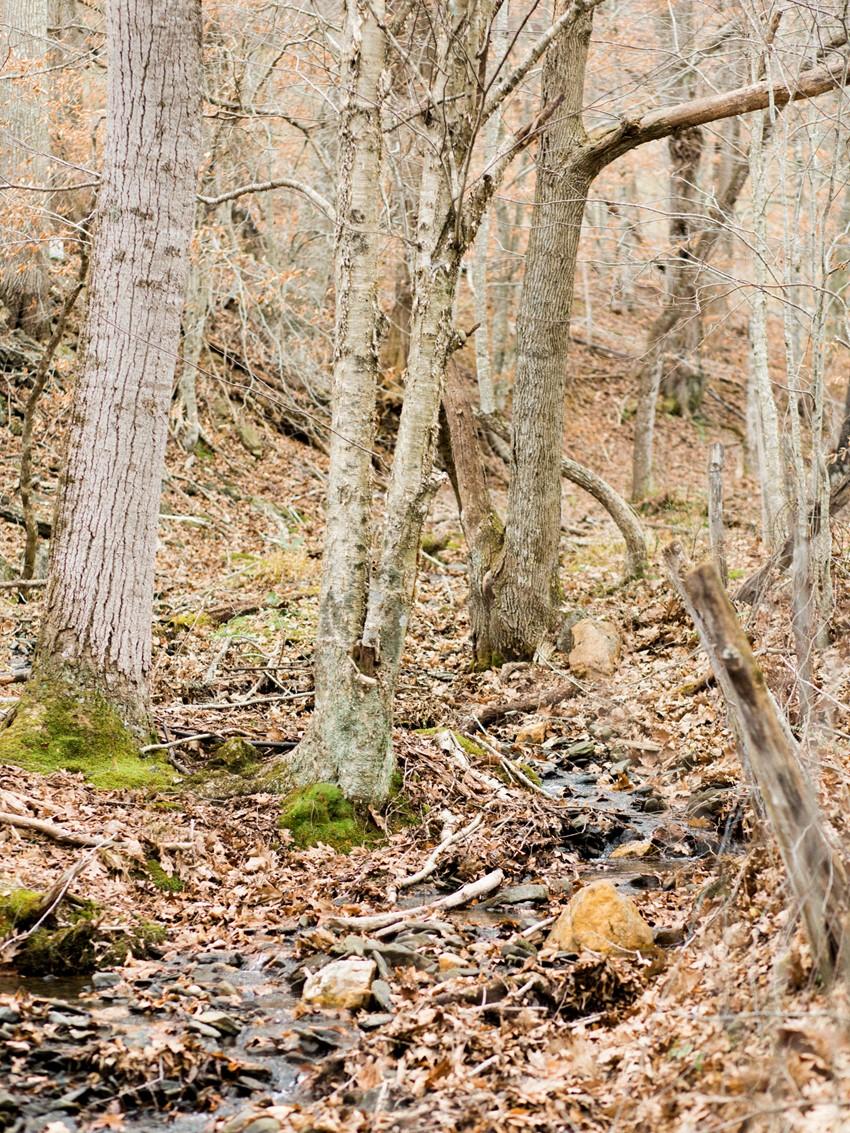 Autumn Woodland// Photography ~ Live View Studios