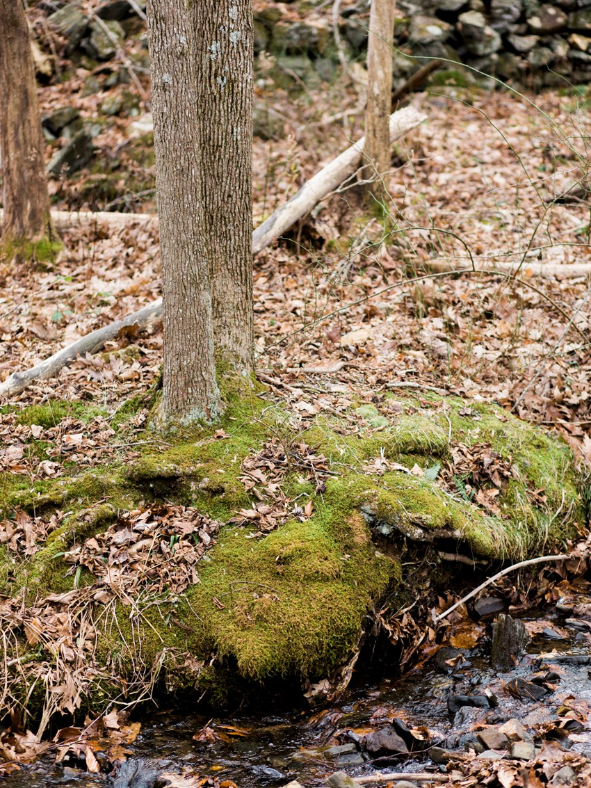 Autumn Woodland // Photography ~ Live View Studios
