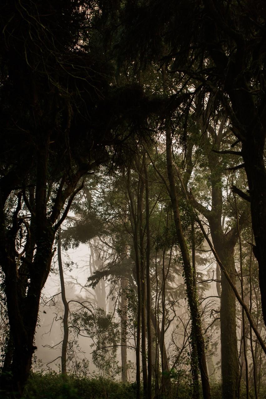 Foggy Woodland