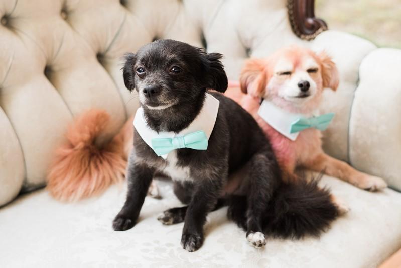 4 legged weddings guests